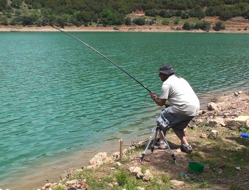 Catch and release Carp fishing στον Λάδωνα